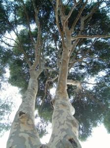 mobilier jardin eucalyptus